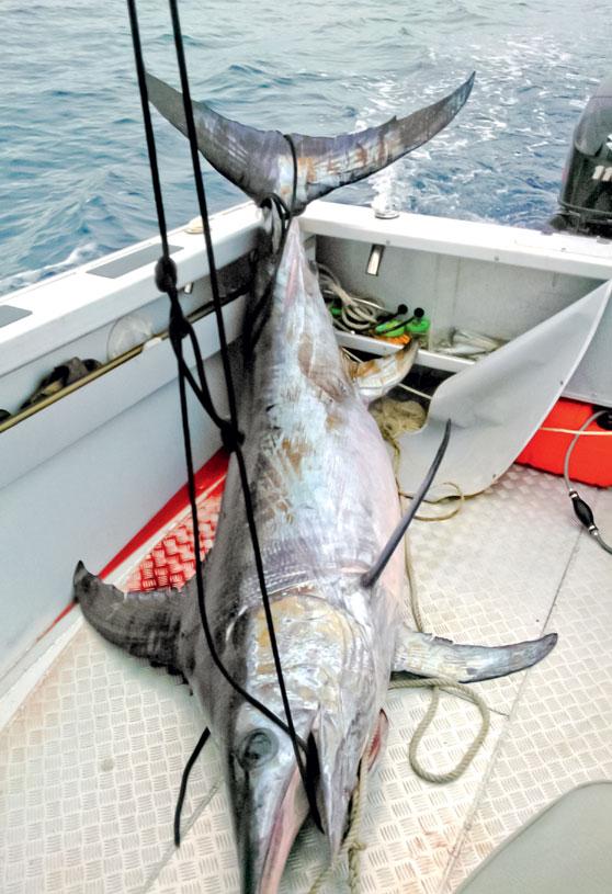 Broadbill swordfish solo the fishing website for Circle fishing boat
