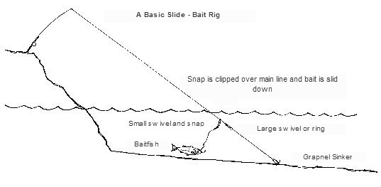 slide baiting in the surf - the fishing website, Hard Baits