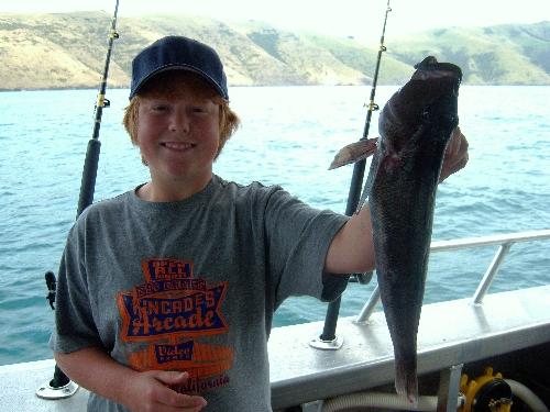 My Sons 1st Akaroa Blue Cod