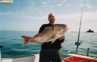 """25lb """"FAT AS"""" SNAPPER CAUGHT STRAYLINING WITH A PILLY"""