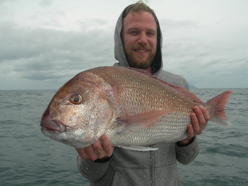 Deep water snapper from DIVERSITY
