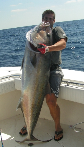 59 kilo amberjack