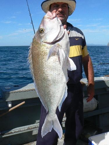 24lb 10.50kg Porae