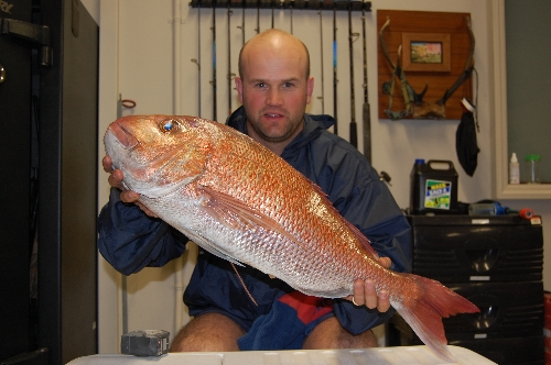 16.5 pounds of spring time Hauraki snapper