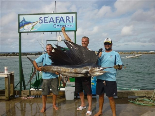 Small sailfish caught onboard Seafari