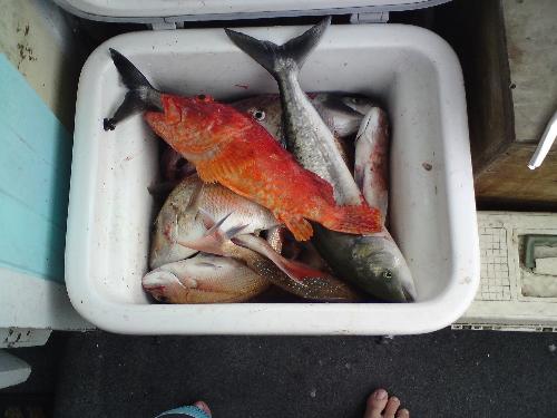 good morning catch