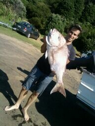 24.6 pound snapper fishing from boat out of raglan