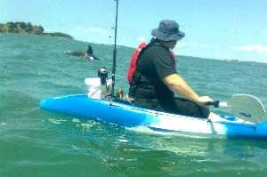 Orcas Mahurangi Harbour , hunting stingrays