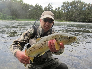 Brown 'mouse eater' Trout, from the maruia river