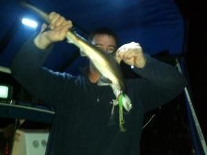 Baby HammerHead shark caught on a softbait