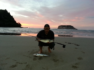 best saltwater 7wt fly fun will ever have in NZ 3.2kg karwhi !