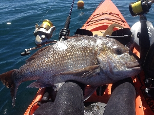 22lb first snapper for 2014