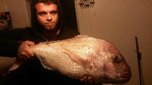 8.5kg - 17 pound snapper, Taranaki!!!