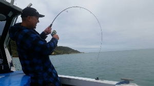 Synit Rod bending playing a 26pound snapper