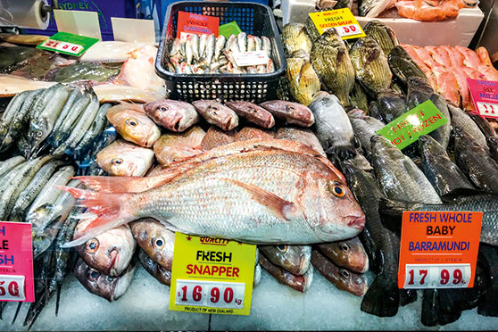 The non-fishing public want to be able to tap into the resource with fairly-priced fish. This snapper, sold as fresh NZ caught produce, was cheaper in Melbourne last year than could be bought at the time domestically.