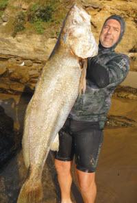 Spearfishing - NSW Mulloway - The Fishing Website