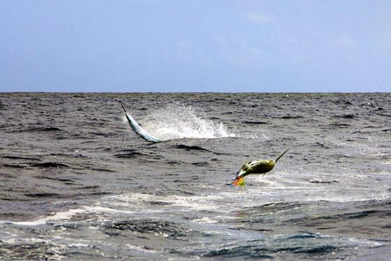 Gamefishing In Vava U The Fishing Website