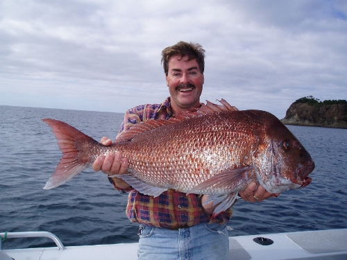 Mercury bay snapper fishing at its finest!