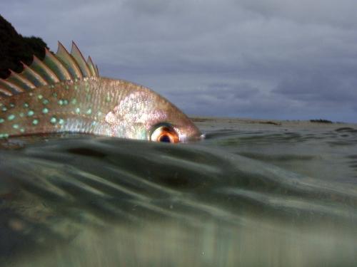 half underwater shot with Olympys