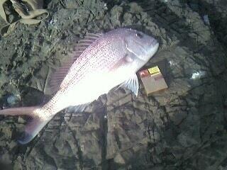 3.6kg Off the rocks