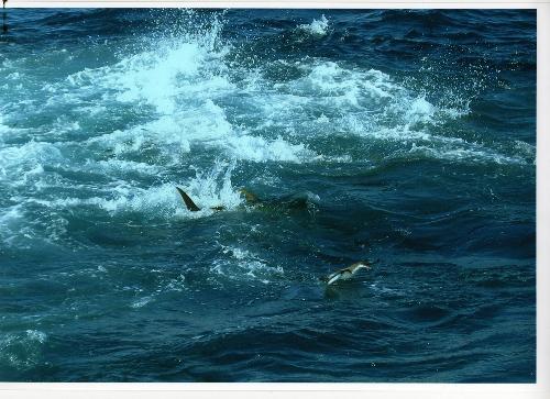 Yellowfin Magic