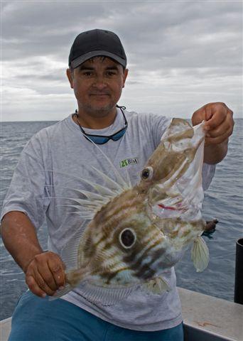 Pogo's John Dory - great eating fish!!