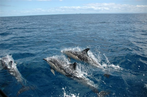 Epic Adventures Dolphins