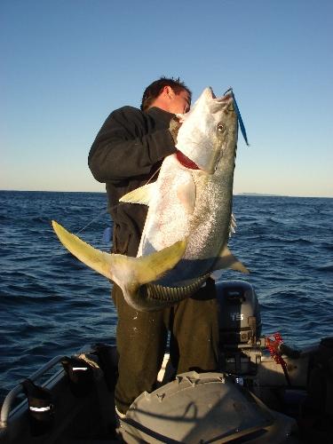 26kg of fighting fish