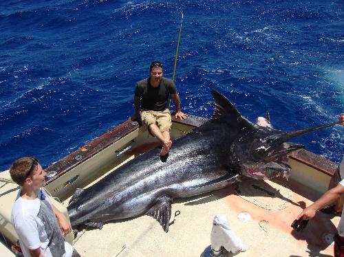 1245 lb Blue Marlin