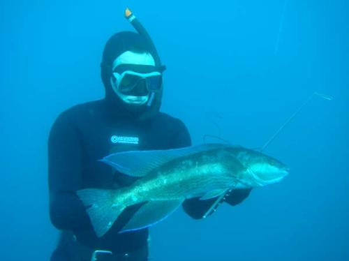 kolt free diving