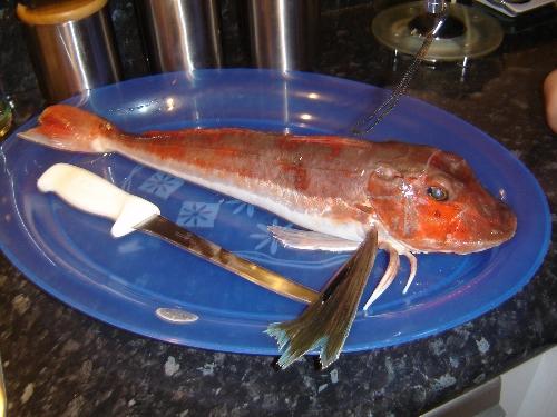yumyum 46cm carrot