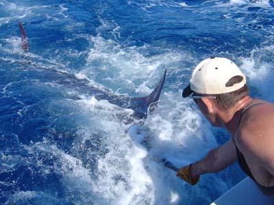1st Blue Marlin for 09/10 season
