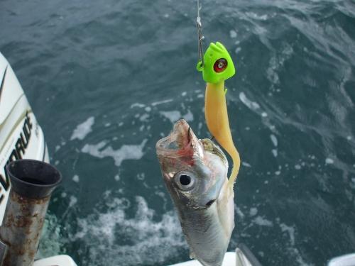 1st ever fish on softbaits