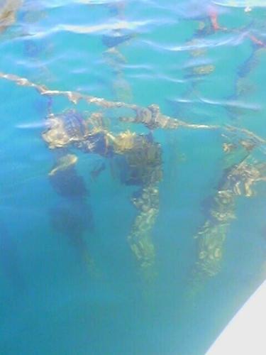 mussel farm coromandel or the aquarium!