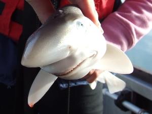 Smiling Shark